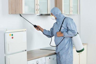 kitchen - pests