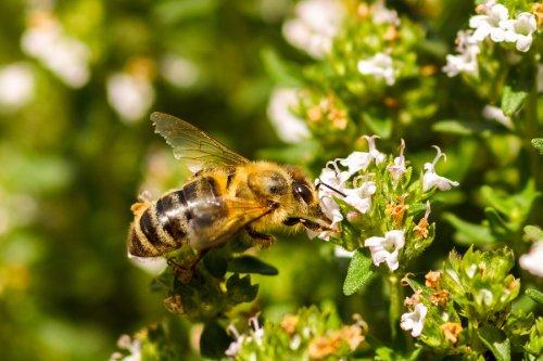 bumble - bees