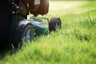 Essential Lawn Care Tips for Spring San Francisco