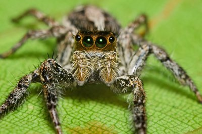A Look at Some Common Household Spiders Pleasanton