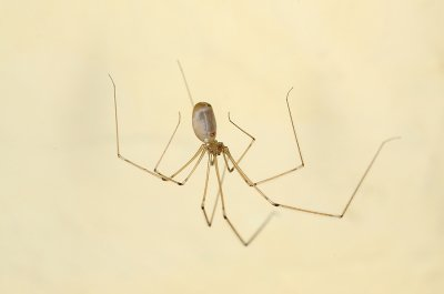 Spiders You Might Find In Your California Home Pleasanton