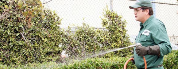 Spotlight on Weed Control Pleasanton