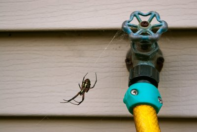 pest control in pleasanton, ca