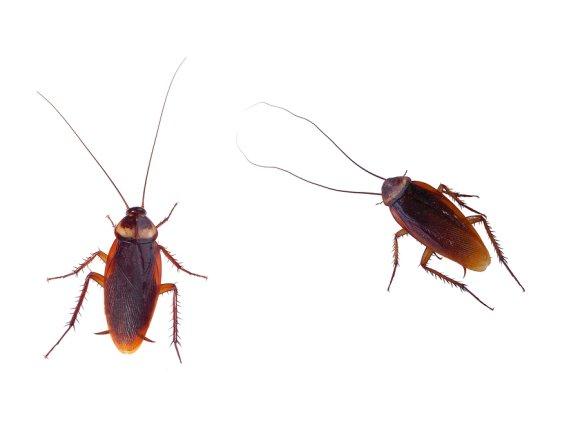 bug exterminator in dublin, ca