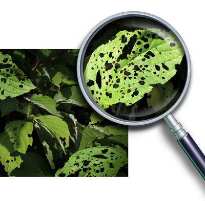 plant disease diagnosis